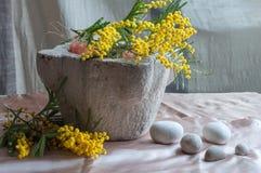 Mimosa na pedra do almofariz Fotos de Stock