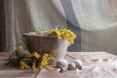 Mimosa na pedra do almofariz Imagens de Stock Royalty Free