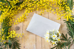 Mimosa, Narcissus in the International Women's Day Stock Photo