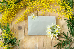 Mimosa no dia das mulheres internacionais Foto de Stock Royalty Free