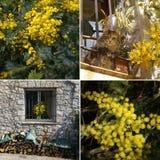 Mimosa no Riviera francês collage foto de stock royalty free