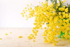 Mimosa para el día de las mujeres internacionales Imagen de archivo libre de regalías