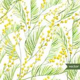 Mimosa pattern. Beautiful watercolor vector spring mimosa pattern on white fon vector illustration