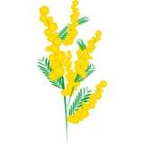 Mimosa per il giorno delle donne Illustrazione Vettoriale