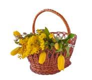 Mimosa, ramitas del sauce y tulipanes en una cesta Foto de archivo