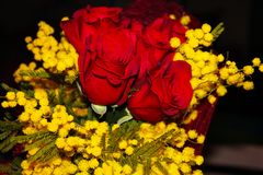 Mimosa and red roses royalty free stock photos