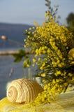 Mimosa's 10 Royalty-vrije Stock Afbeeldingen
