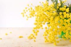 Mimosa's voor de dag van internationale vrouwen Royalty-vrije Stock Afbeelding