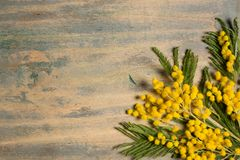 Mimosa silver wattle branch on wood background Stock Photo
