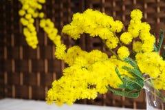 Mimosa su fondo di vimini Fotografia Stock