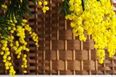 Mimosa sur le fond en osier Image libre de droits