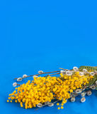 Mimosa, twigs of willow and easter eggs Royalty Free Stock Photos