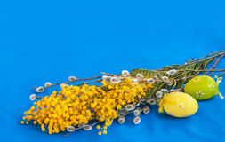Mimosa, twigs of willow and easter eggs Stock Photography