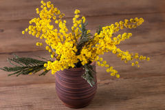 Mimosa in a vase Stock Photos