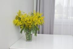 mimosa in vaso di vetro Fotografia Stock Libera da Diritti