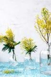 Mimosa in vaso di vetro sulla fine della tavola su Immagine Stock