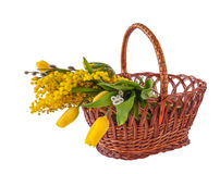 Mimosa, willow twigs and tulips in a basket Stock Photo