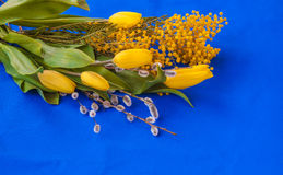 Mimosa, willow twigs and tulips on blue background Stock Photography