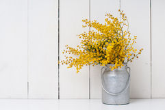 Mimosa. Yellow spring flowers in vintage aluminum cans on white barn wall background Stock Photo
