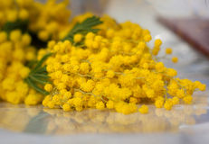 Mimosablommor Royaltyfri Fotografi