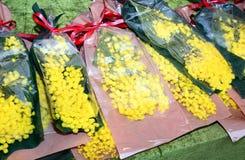 Mimosablommor för kvinnors dag på 8 mars Arkivbilder