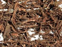Mimosahostilis rotar skället Royaltyfria Bilder