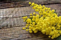 Mimosan blommar på wood bakgrund Arkivbild