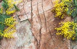 从mimosaon的装饰构成一石backgrou 库存照片