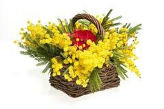 Mimosas Royalty Free Stock Photo