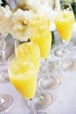 Mimosas con i fiori Immagini Stock Libere da Diritti