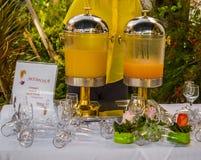 Mimosas en el jardín Foto de archivo libre de regalías