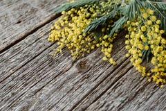 Mimosas jaunes sur le backgound en bois Jour international de femmes de concept avec la vue supérieure de fleurs Image libre de droits