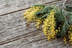 Mimosas jaunes sur le backgound en bois Jour international de femmes de concept avec la vue supérieure de fleurs Photo libre de droits