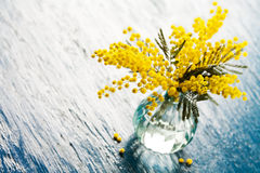 mimose Lizenzfreies Stockbild