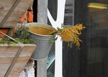 Mimosor i hinken Arkivfoto