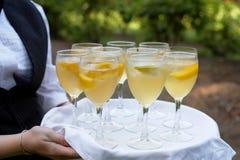 mimoza Obrazy Royalty Free