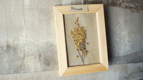 Mimoza flowers in picture frame on wall. Interior stock video footage