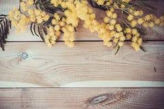 Mimoza kwiat na drewnie Zdjęcia Stock