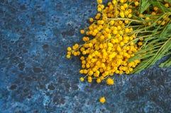 Mimoza kwiatu bukiet Zdjęcie Stock