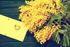 Mimoza kwiatu okwitnięcie na białym tle Obraz Stock
