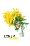 Mimoza kwiatu okwitnięcie odizolowywający na białym tle Obrazy Royalty Free