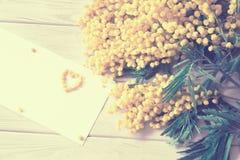 Mimoza kwiatu okwitnięcie odizolowywający na białym tle Zdjęcie Royalty Free