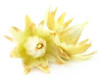 Mimusops elengi or Bokul flower Royalty Free Stock Photos