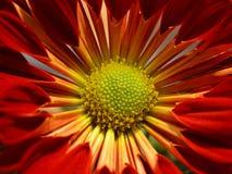 min egen sun Royaltyfria Bilder