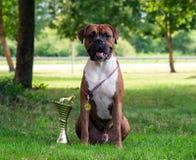 Min favorit- hundkapplöpning Arkivfoto