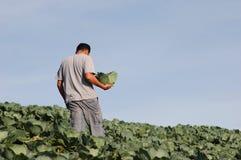 min grönsak Fotografering för Bildbyråer