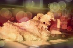 min gulliga hund royaltyfri foto