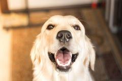 Min härliga hund som namnges Helgdagsafton royaltyfri bild