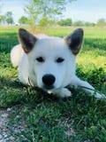 Min hundängel royaltyfria bilder