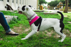 Min hund Lala royaltyfri foto